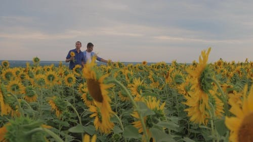 Two Friend Farmer Rancher ,Funny Around Situation on the Sunflower Field. Partner Farmers Men
