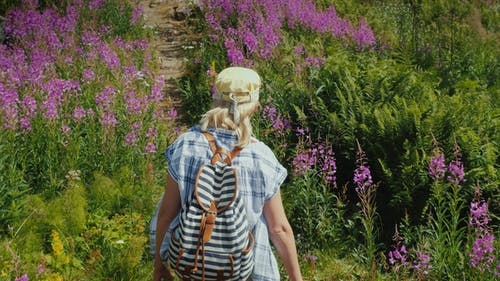 A Woman with a Backpack Walks Along a Picturesque Path Among the Flowers of Willow-tea
