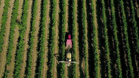 Thumbnail for Aerial View of a Tractor Harvesting Grapes in a Vineyard