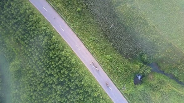 Thumbnail for Asphalt Road with Steep Green Roadsides