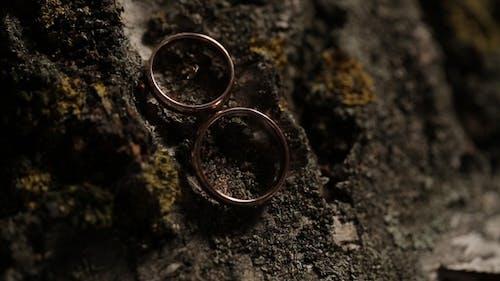 Gold Wedding Rings on the Tree   Shoot Diamon Jewellery