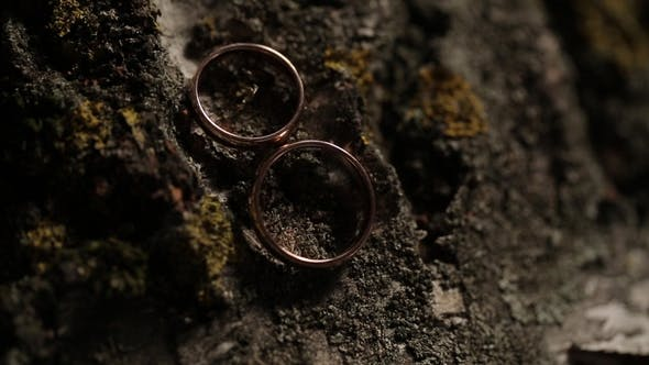 Thumbnail for Gold Wedding Rings on the Tree   Shoot Diamon Jewellery