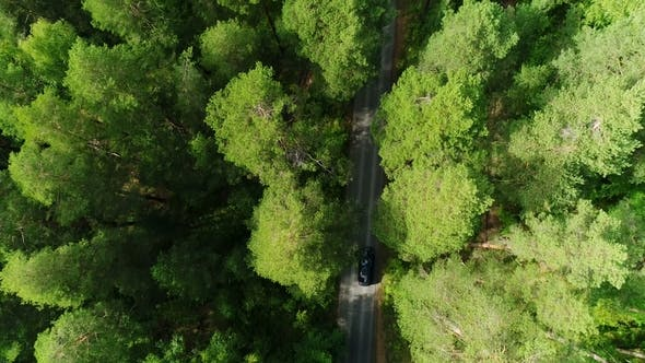 Thumbnail for Bright Forest Tree Tops Lit By Sunlight and Dark Shades with Lone Car