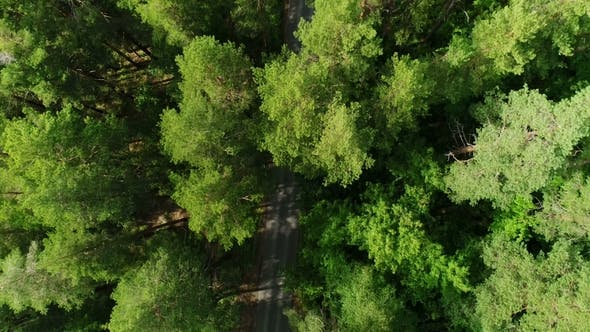 Thumbnail for Bird Eye Flight Above Tree Tops Showing Road Hidden in Forest Darkness