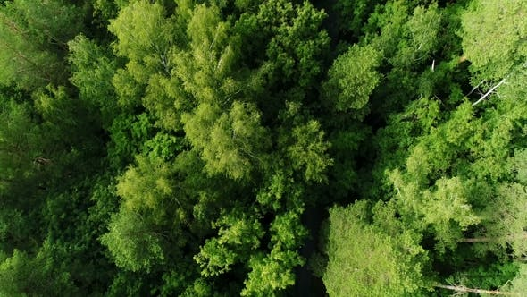 Thumbnail for Aerial Camera Follows Driving Minivans Along Road in Tall Thick Forest