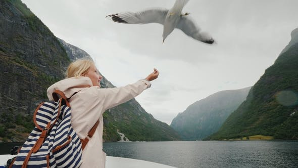 Thumbnail for A Woman Is Feeding a Gull That Flies By. Trust and Tame the Concept. Journey Through the Fjords of