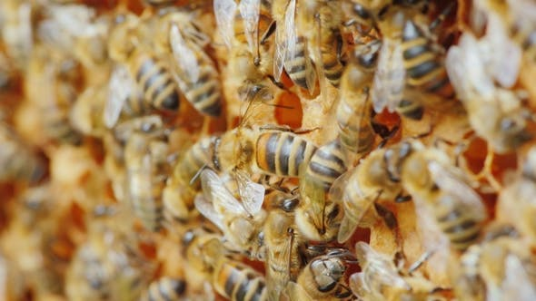 Thumbnail for Entertaining Bee Life, Amicable Team Work on the Creation of Delicious Honey