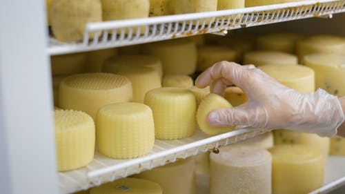 Worker Is Putting Formed Cheese in a Refrigerator Into Storage in Cheese Factory, Wearing Hygienic