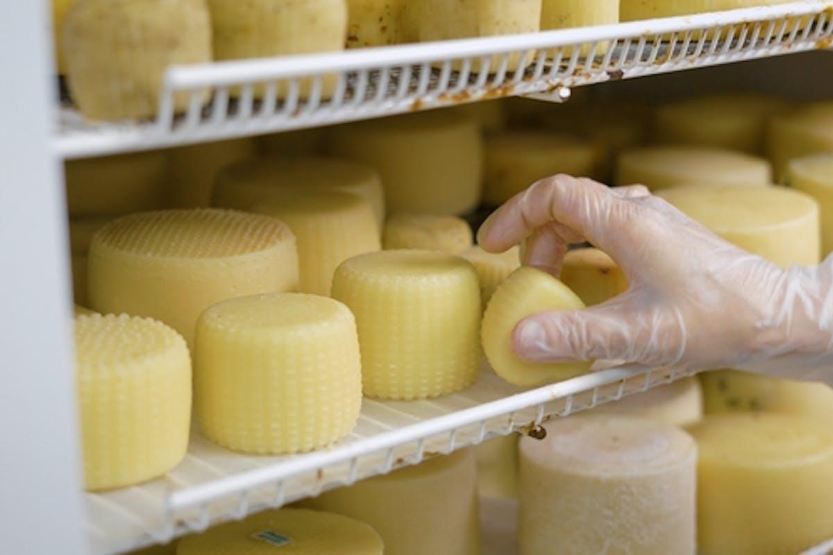 Worker cheese cheese