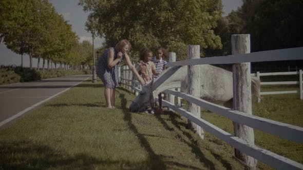 Thumbnail for Happy Diverse Family with Kids Stroking Horse in Farm