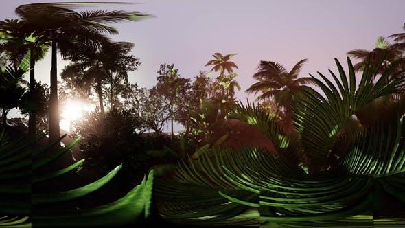 Thumbnail for VR360 Kamera bewegt sich in einem tropischen Dschungel Regenwald