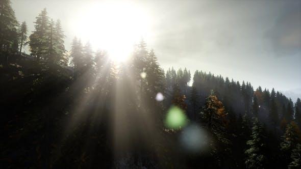 Thumbnail for Sun Beams Through Trees
