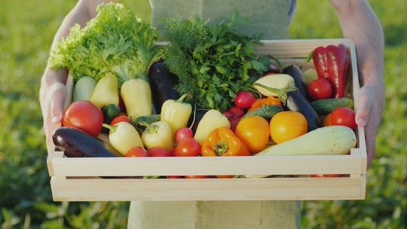 Cover Image for The Farmer Is Holding a Wooden Box with a Set of Various Vegetables. Organic Farming and Farm