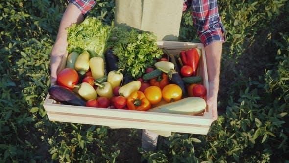 Thumbnail for Der Bauer hält eine Holzkiste mit einem Satz von verschiedenen Gemüse. Ökologischer Landbau