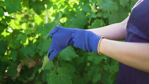 Caucasian Female in Apron Putting on Blue Gardening Gloves