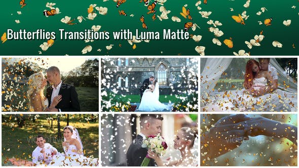 Thumbnail for Butterflies Transition – 7 Variations