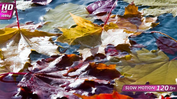Thumbnail for Yellow Leaves Falling in Autumn Puddle