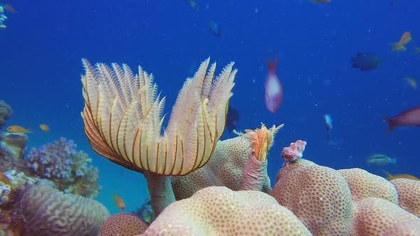 Underwater Tube Worm