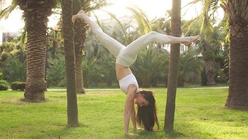 Handstand Yogi Woman Practicing Yoga Downward Facing Tree Pose