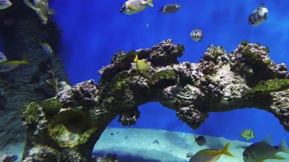 Thumbnail for Tropical Fish Swim in the Ocean or Sea