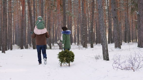 Thumbnail for Two Parents with a Child Driving a New Year Tree on a Sled on a Snowy Forest