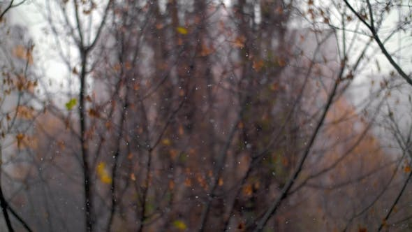 Cover Image for Late Autumn Scene with Snowfall and Faded Tress