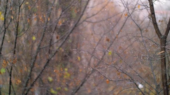 Cover Image for Snowfall in Autumn Against Faded Trees