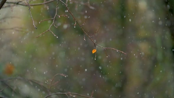 Thumbnail for Wet Bare Tree and Light Snowfall on Autumn Day