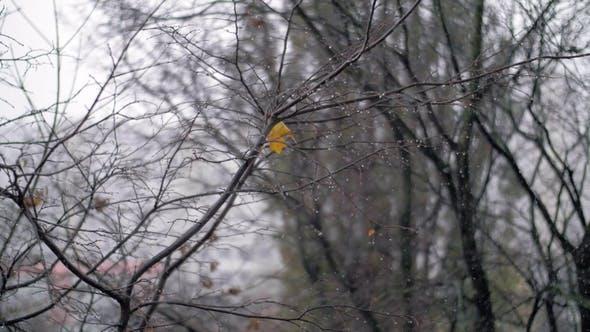 Thumbnail for Bare Tree and Autumn Snowfall
