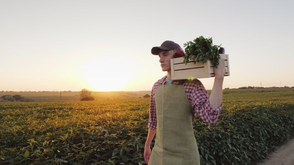 Thumbnail for A Young Male Farmer Walks Along the Field with a Box of Fresh Vegetables