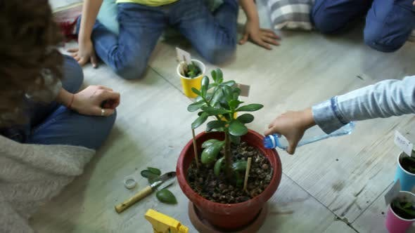 Thumbnail for Kids Watering Repotted Plant in Kindergarten