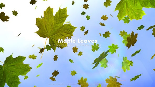 Cover Image for Maple Leaves