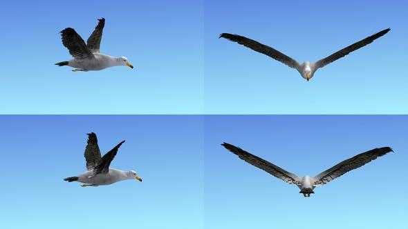 Thumbnail for Seagull Flight Loop