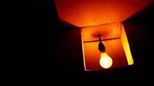 Thumbnail for Bulb