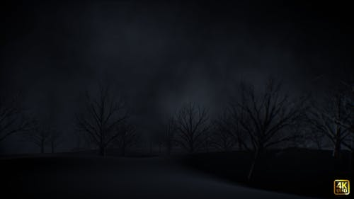 Tree On Dark Night