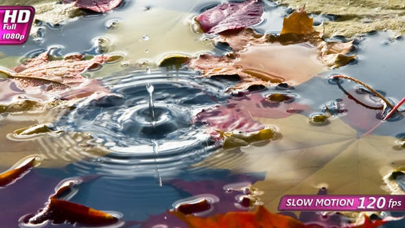 Thumbnail for Pfütze mit hellen Herbstblättern
