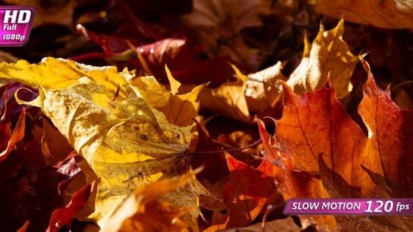Thumbnail for Morning Colors Of Warm Autumn