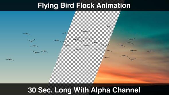 Thumbnail for Flying Bird Flock Forward