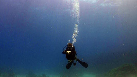 Thumbnail for Diver Swims Coral Reefs