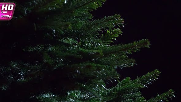 Thumbnail for Dark Coniferous Forest Thicket