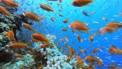 Underwater Glass-fish Orange-fish