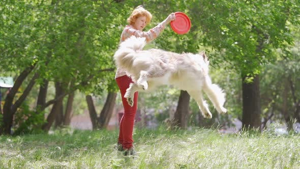 Cover Image for A Dog Border Collie in the Air Catching an Orange Frisbee