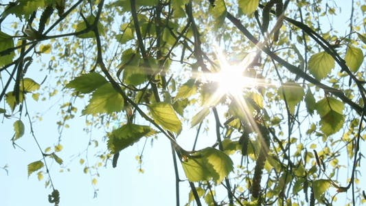 Thumbnail for Leaves And Sunlight