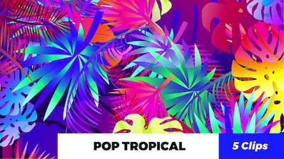 Pop Tropical Loops