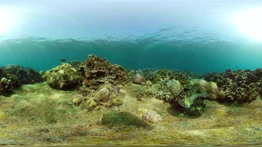 Thumbnail for Coral Reef and Tropical Fish Vr360