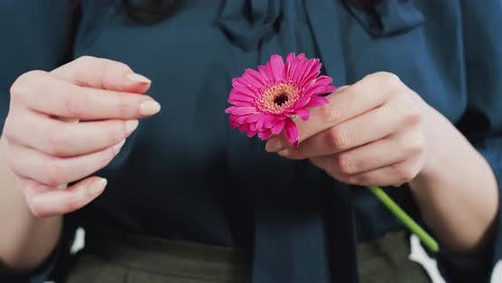 Thumbnail for Tearing off the flower petals