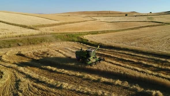 Aerial View Wheat Harvesting