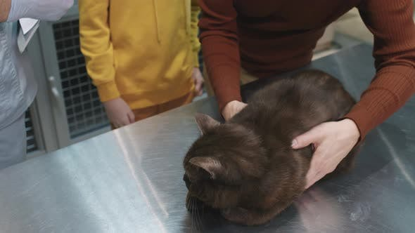 Pet Owners Picking Cat Up From Vet Clinic