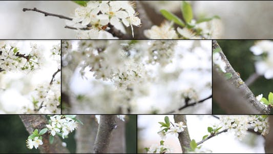 Thumbnail for A Tree In The Spring