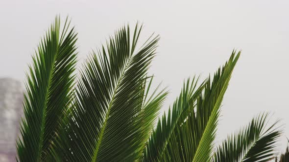 Thumbnail for Closeup Shot of Palm Leaves on a Beautiful Windy Day
